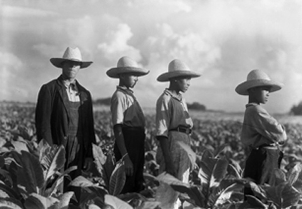Bayard Wootten photo of field laborers